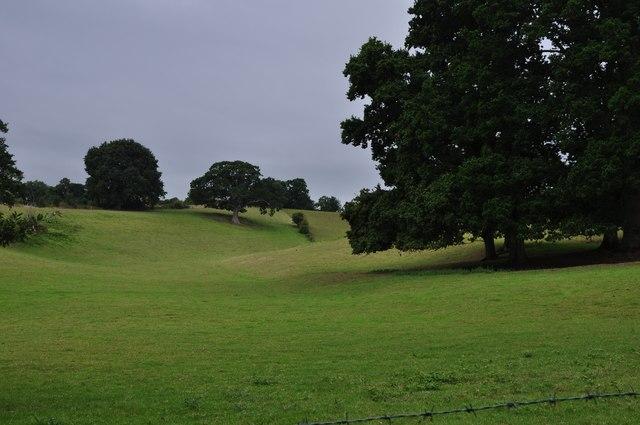 Teignbridge : Grassy Field