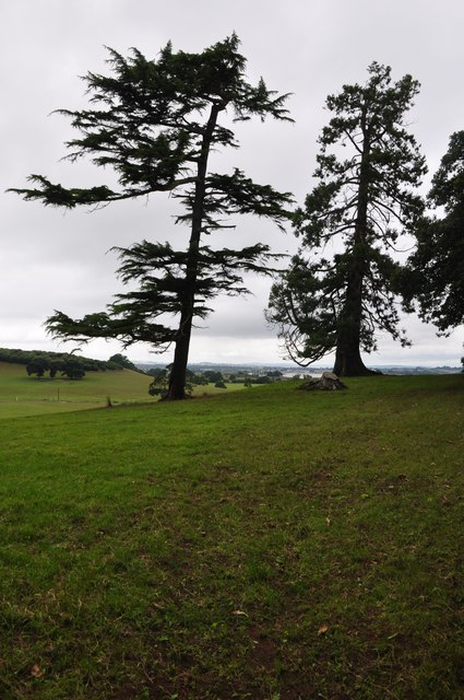 Teignbridge : Grassy Field & Trees