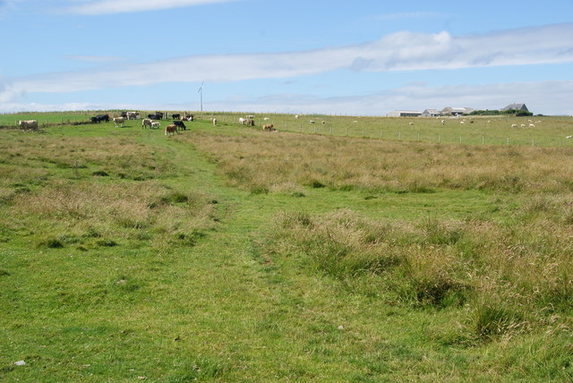 Grazing land for cows on Howequoy Head