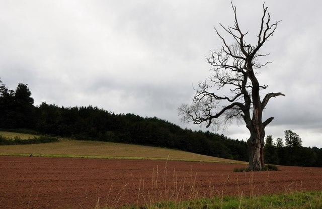 Teignbridge : Ploughed Field