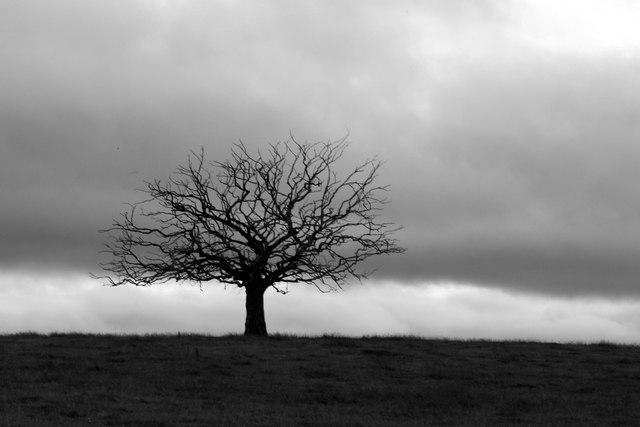 Lonesome tree at Bellcraig