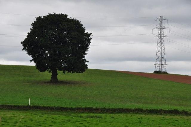 Teignbridge : Grassy Field & Pylon