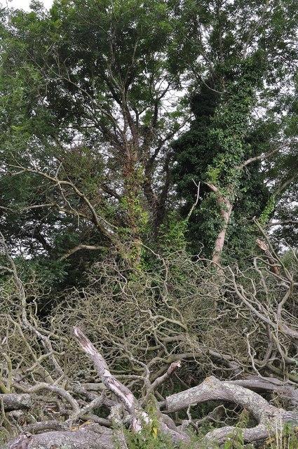 Teignbridge : Woodland & Branches