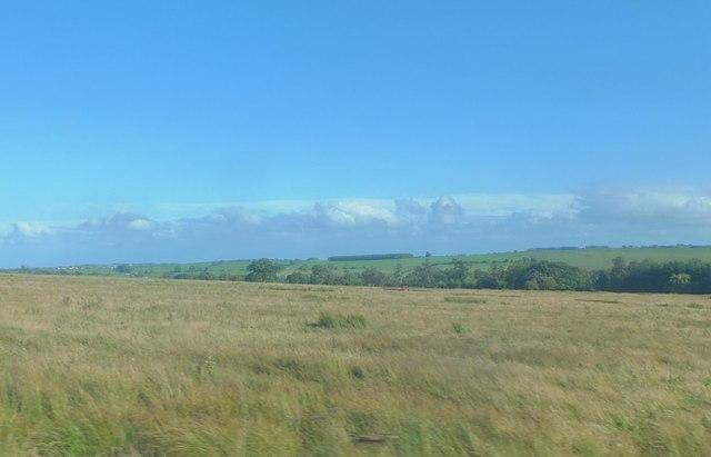 Rough grazing north of Lordenshaw Plantation