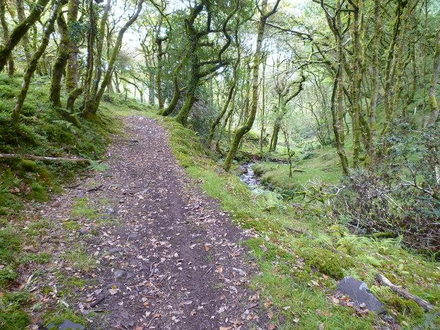 Shillett Wood and bridleway to Porlock