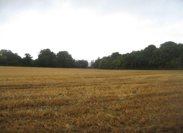 Grey day - Back Field
