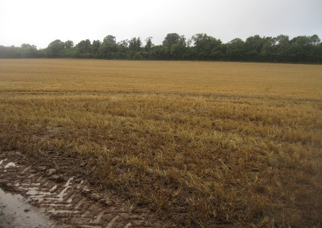 Damp conditions in Lower Field