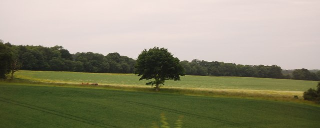 An isolated tree