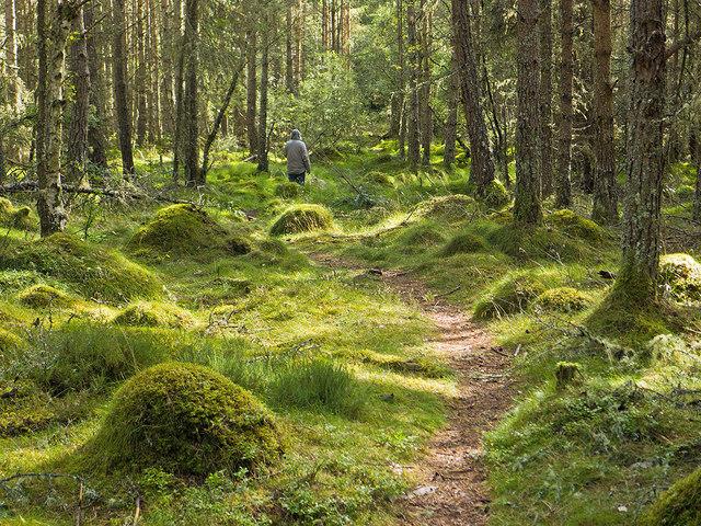 Footpath to Balnakyle in Bellton Wood