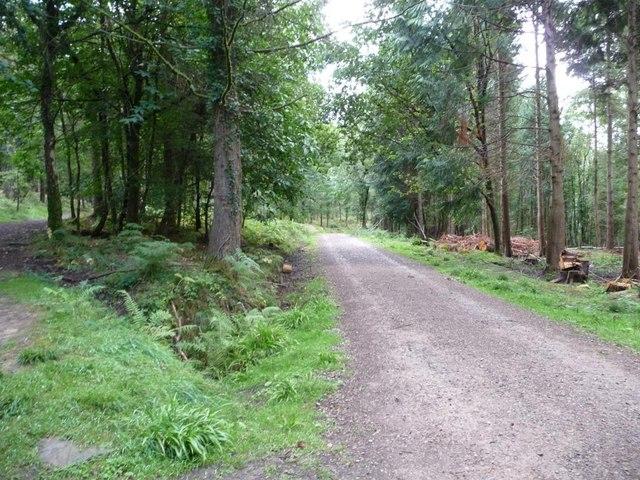 Woodland track, New Beechenhurst Inclosure