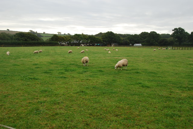 Pasture Land and Sheep