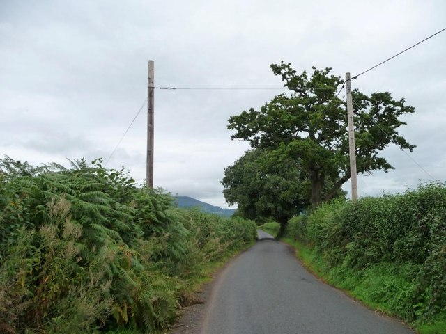 Trees along the road to Llanover