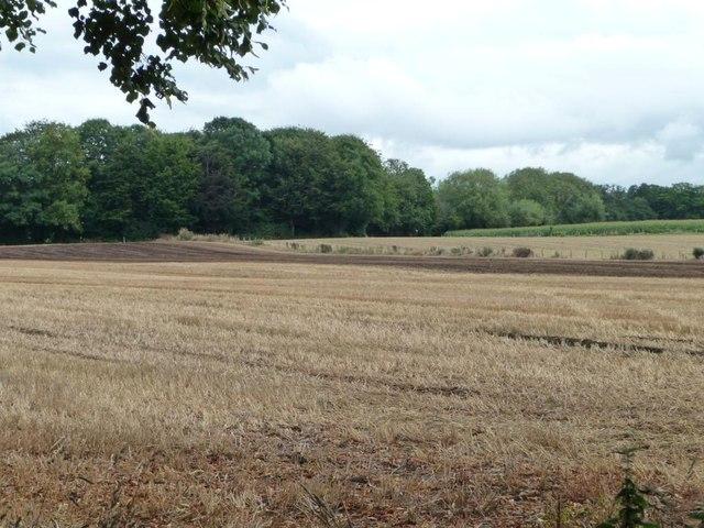 Stubble field south of Fro-fawr Farm