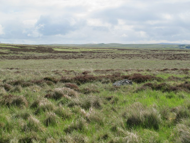 Moorland east of the Greenchester-Potts Durtrees road (3)
