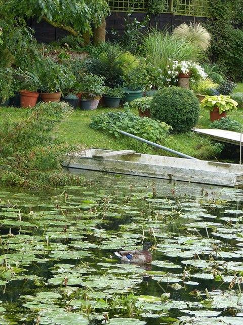 Mallard and House Boat gardens
