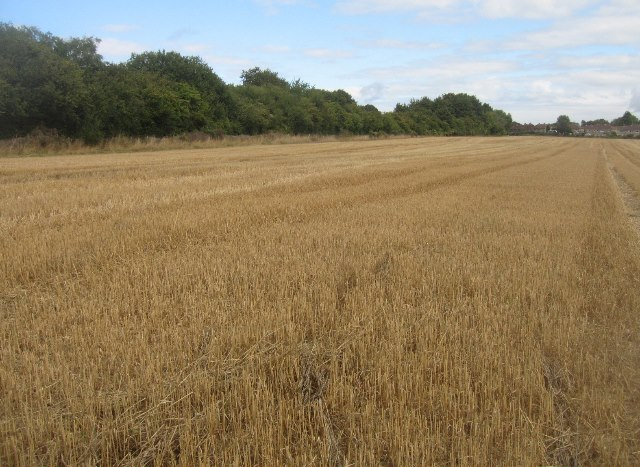 Bales have gone