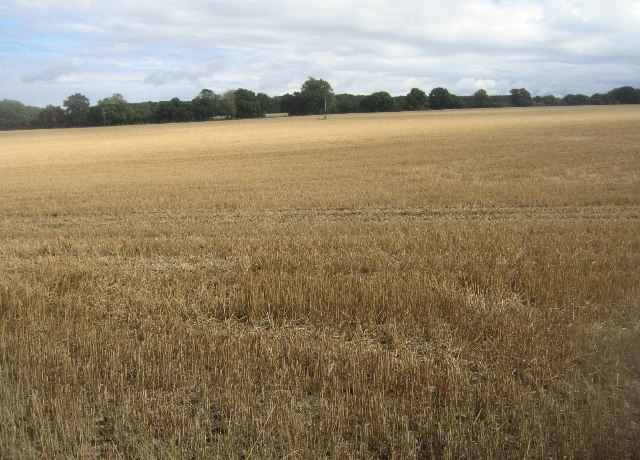 Farmland west of Pardown