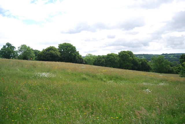 Meadow south of Burwash