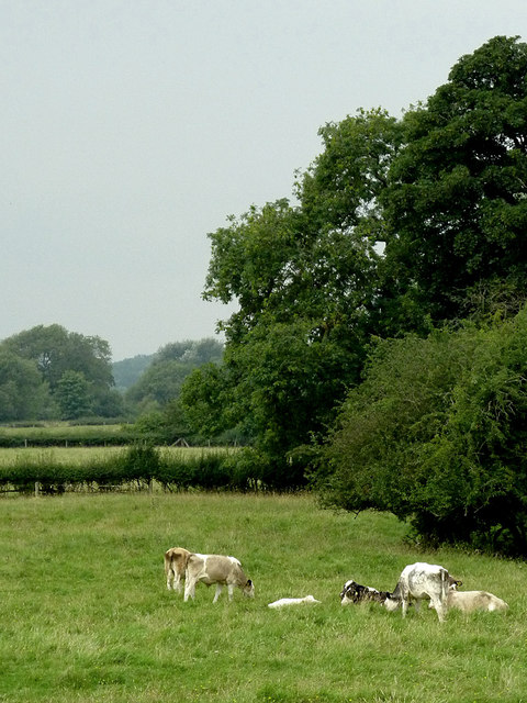 Pasture and woodland north-east of Fleckney, Leicestershire