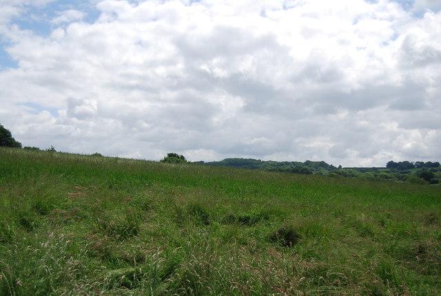Grassland, Dudwell Valley
