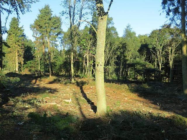South Bank Wood