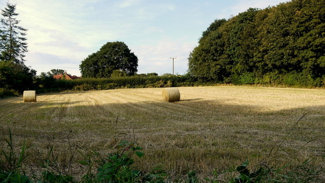A very small arable field