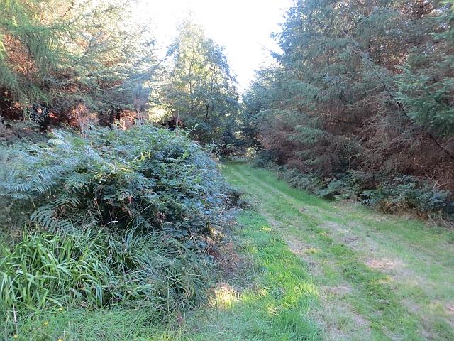 Path junction, Penmanshiel Wood
