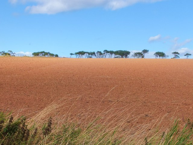 Arable land near Linthill