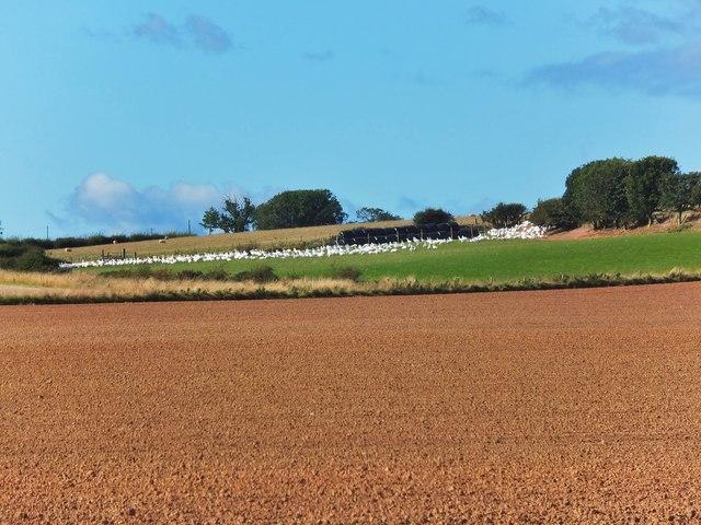 A splash of white near Alemill