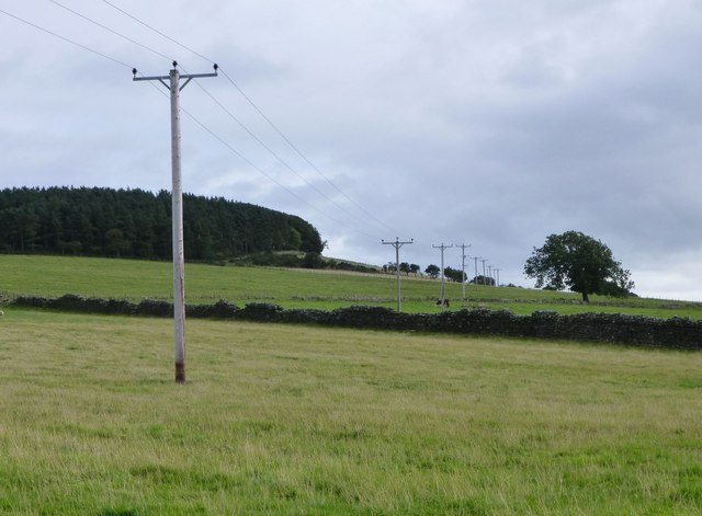 Electricity Poles cross the pasture