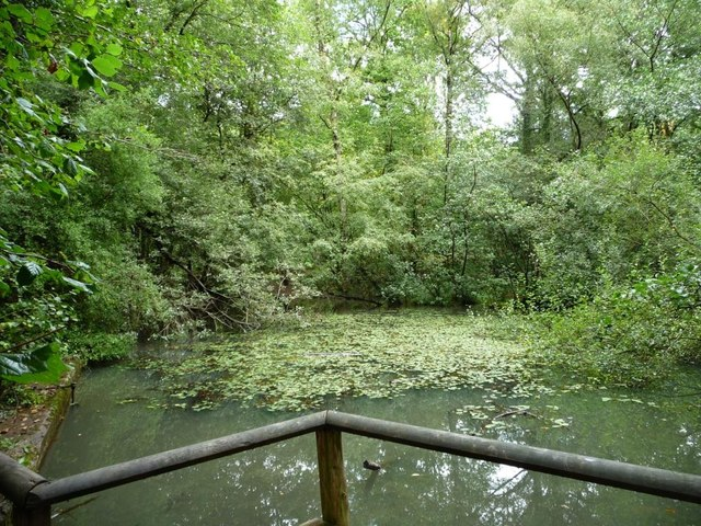 Small pond on the Beechenhurst Sculpture Trail