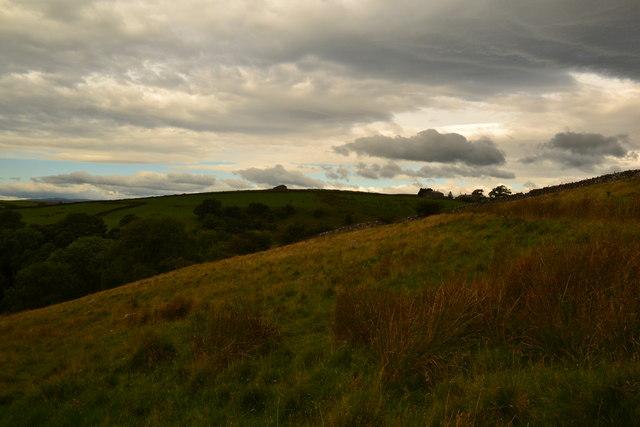 Moorland sedges and grasses