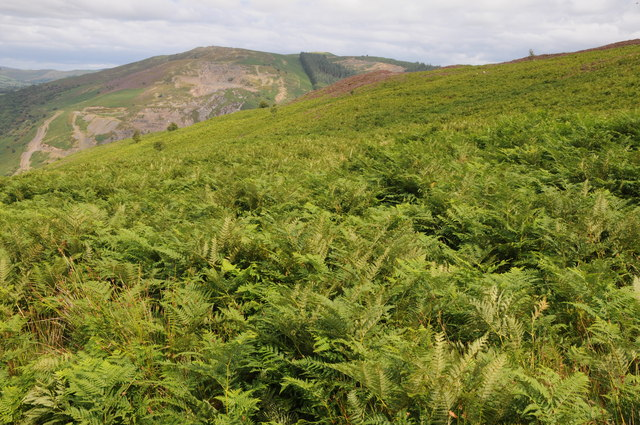 Bracken hillside above the Wye valley
