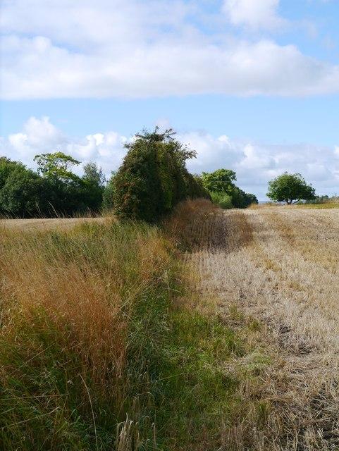 Field Boundary Near Portnauld