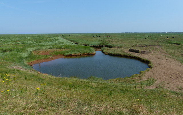 Pool on the salt marsh