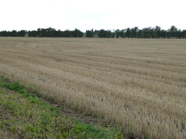 Stubble field on Richer's Drove, Whittlesey
