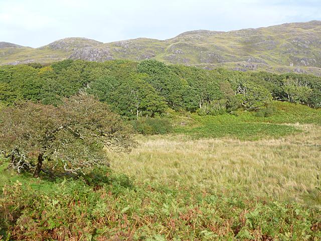 Woods near Achosnich