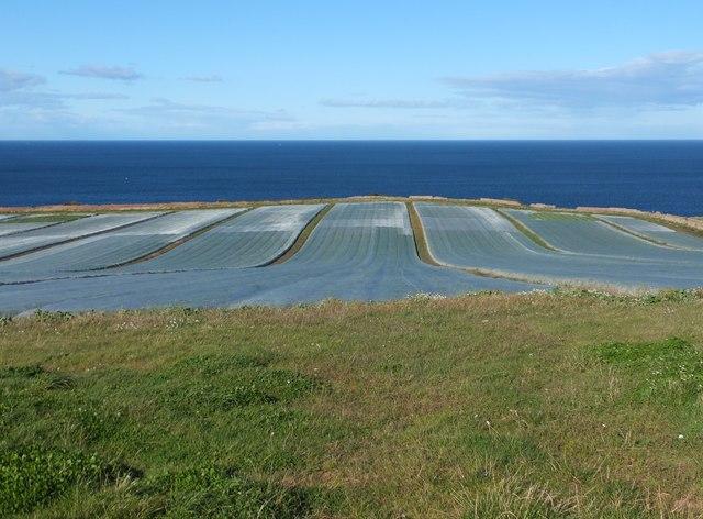 Oh I do love the swede beside the seaside ...