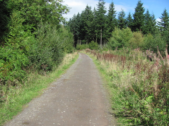 Restricted byway through Llanthony Wood