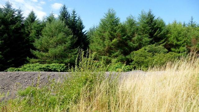 Forestry by Merthyr Road