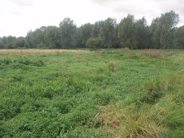 Ditch at Langford Meadows