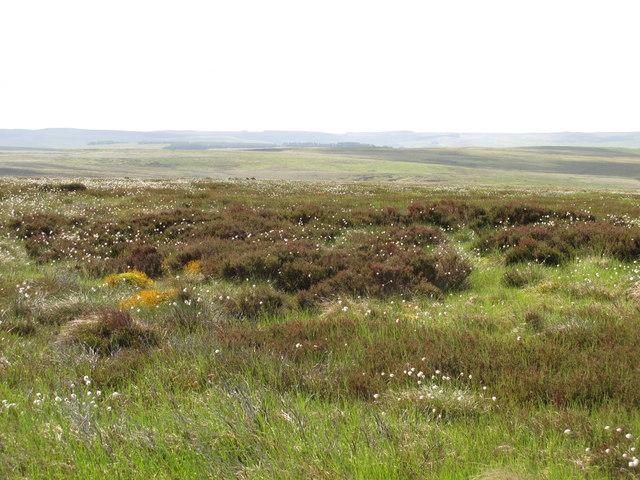 Moorland above Limestone Burn