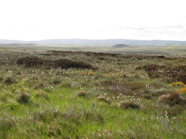 Moorland northwest of Black Stitchel