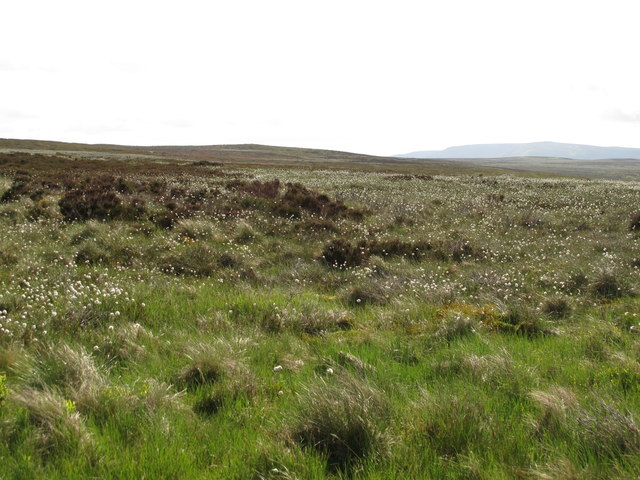 Moorland south of Greenwood Law