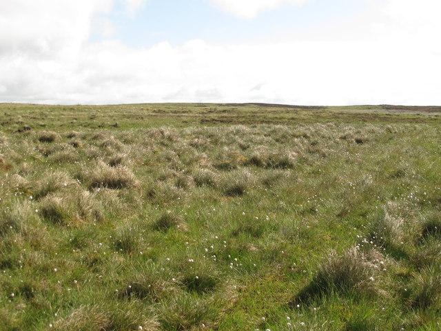 Moorland west of Cowey's Cairn