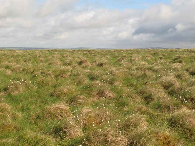 Moorland southwest of Greenwood Law (2)