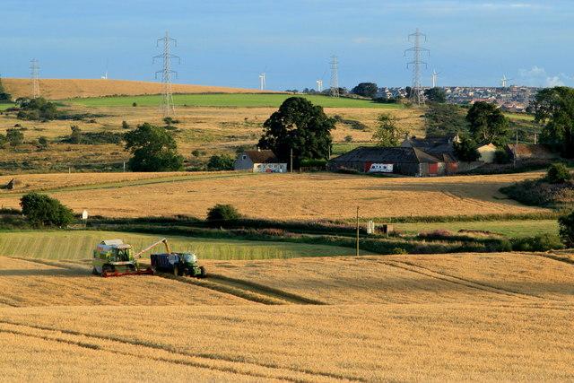 Harvest Time at Middleburn