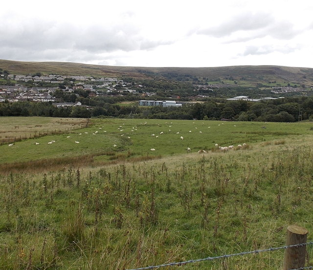 Sheep on upland pasture, Nantyglo