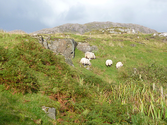Sheep in a Quarry
