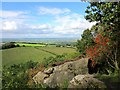 SJ5155 : View towards Burwardsley Hill by Jeff Buck